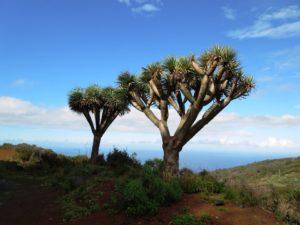 Kanarische Inseln: La Palma